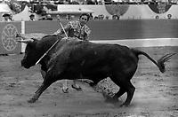 Corrida aux Arènes du Soleil d'Or (quartier des Arènes). 9 mai 1971. Scène de tauromachie. Paco Camino effectue une passe de muleta avec le taureau