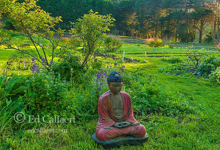 Buddha, Green Gulch Zen Center, Muir Beach, Marin County, California