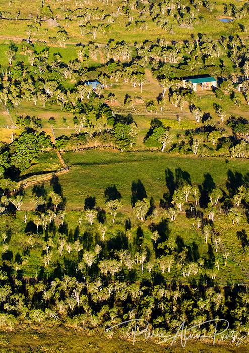 La Foa, savane à niaoulis