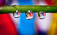 Macro photograph of sailboat reflections focused into water droplets.