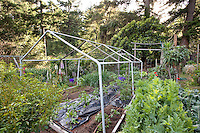 PVC greenhouse frame over vegetable beds with black row cover to warm soil in organic California garden among redwood trees; MUST CREDIT: Elvin Bishop Garden