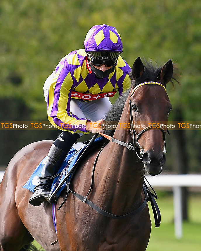In The Breeze ridden by Jason Watson goes down to the start of The Radcliffe & Co Novice Median Auction Stakes (Div 2) during Horse Racing at Salisbury Racecourse on 11th September 2020