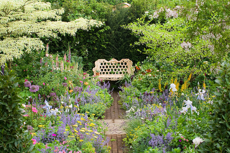 Garden bench in lush springtime flower garden with purple Lupinus lupines, iris, peonies paeonia, Allium, in soft pastel colors of blue and lavender