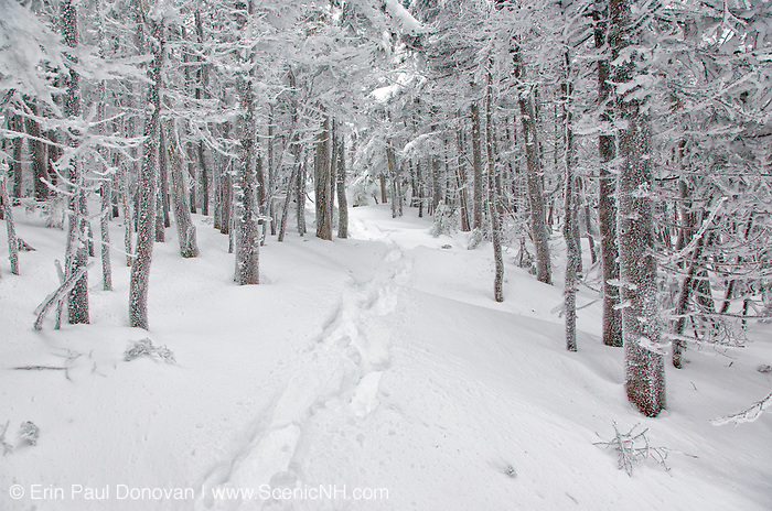 Snowshoes tracks along the Hancock Loop Trail in the New Hampshire White Mountains during the winter months.