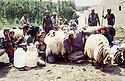 Iran 1980 <br /> Near Sheikhan, women milking sheep near the former sheep-fold now the weapons' store<br /> Iran 1980<br /> A cote de Sheikhan, femmes trayant des brebis a cotee de l'ancienne bergerie devenue le magasin des armes des peshmergas