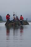 Oyster Spat harvest, Tarboo Bay Shellfish Farm, Rock Point Oyster Company, Tarboo Bay, Dabob Bay, Hood Canal, Puget Sound, Washington State,