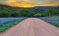 Road Less Traveled 2 - We love this county dirt road in the Texas Hill country in spring with the bluebonnets lining the road and the hills behind as the sunsets in the west. You can get a feel for the rural hill country here with the texas bluebonnets and hills with this wonderful texas sunset. The back road in Texas hill country are always less traveled but can be beautiful places where you can see for a great distance in some places with some very nice traditional texas scenery. Add a few bluebonnets wildflowers and you have a nice texas hill country landscape with texas bluebonnets what more can yo ask for. This is a place where we come every year first to check for bluebonnets as it is a great place to see bluebonnets if we are having a good year.