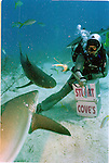 Shark Diving in the Bahamas.