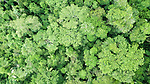 Aerial view of the canopy of mid-altitude montane rainforest. Manu Biosphere Reserve, Amazonia, Peru.