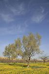 G-351 Eshkol national park