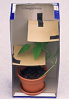 HS69-072z  Bean plant growing and bending around objects, plant experiment