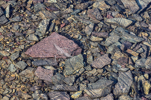 Rocks on bottom of pond that has a thin sheet of ice on top.  Alpine tarn, Glacier National Park, Montana.  Fall.