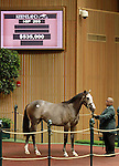 September 09, 2014: Hip #205 Tapit - Rose of Killarney filly consigned by Brookdale Sales sold for $535,000 at the Keeneland September Yearling Sale.   Candice Chavez/ESW/CSM