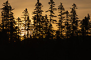 Silhoutte of forest along the Kancamagus Highway in the White Mountains, New Hampshire USA.