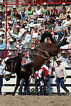 Cheyenne, Wyoming-7/26/2009-Photo by Rick Davis - PRCA bareback rider Chet Johnson of Gillette, Wyoming, scores a thrilling 90 point bareback bronc ride on the bronc Cat Power during final round action at the 113th annual Cheyenne Frontier Days Rodeo.