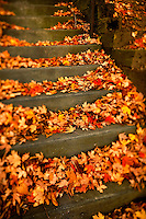 Brilliant red, orange, yellow and brown autumn leaves cover a cement staircase in Charlotte, NC. A summer with frequent rains, followed by fall with hot afternoons and cool nights gave leaf peepers a pallet of colorful fall foliage to enjoy in 2009.