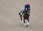 APRIL 30, 2015: Itsaknockout, trained by Todd Pletcher, exercises in preparation for the 141st Kentucky Oaks during morning workouts at Churchill Downs in Louisville, Kentucky. Ting Shen/ESW/Cal Sport Media