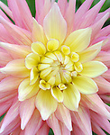 The Dahlia Garden at The Manito Park Gardens in Spokane, Washington on August 27,2009                                                                   Copyright 2009 DVS / RockinExposures
