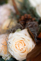 Close up of a delicate cream-coloured rose