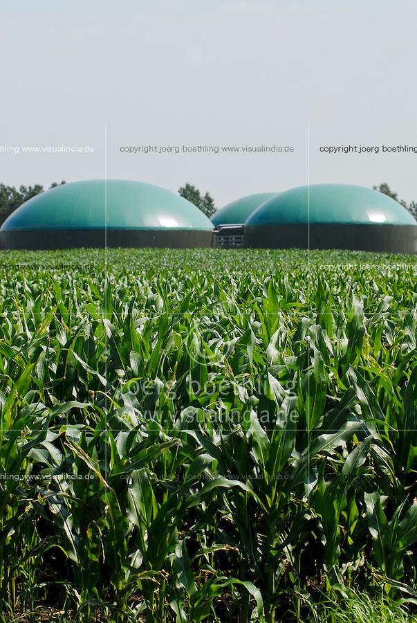 GERMANY agricultural farm with maize field and Biogas plant at Nordstrand / DEUTSCHLAND , Maisfeld und<br /> Bauernhof Kurt Maart mit Biogasanlage mit Blockheizkraftwerk BHKW zur Strom- und Waermeerzeugung auf Nordseeinsel Nordstrand