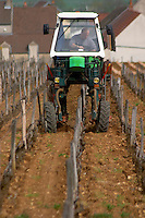 pinot noir working the soil vineyard romanee st vivant vosne-romanee cote de nuits burgundy france