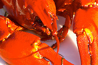 Detail of crayfish with head and claws. Smaland region. Sweden, Europe.