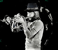 1980 FILE PHOTO - ARCHIVES -<br /> <br /> Chuck Mangione, eyes closed in concentration, caresses the microphone with golden notes from his flugelhorn at the Ontario Place Forum last night. At his first performance there in several months, Mangione was backed by three other members of his quartet and drew 7,500 fans.<br /> Bezant, Graham<br /> Picture, 1980<br /> <br /> 1980<br /> <br /> PHOTO : Graham Bezant - Toronto Star Archives - AQP