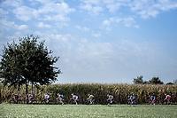 peloton<br /> <br /> 23th Memorial Rik Van Steenbergen 2019<br /> One Day Race: Beerse > Arendonk 208km (UCI 1.1)<br /> ©kramon