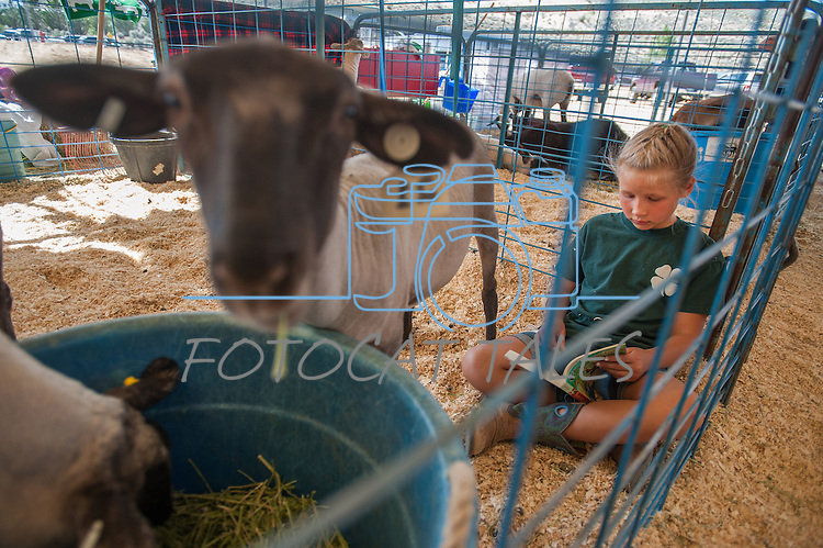 Kelly Strasser 9, reads a book by her sheep Midnight during the NV150 Fair at Fuji Park in Carson City, Nev., on Saturday, August 2, 2014.<br /> (Photo By Kevin Clifford)