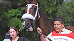 Stephanie's Kitten (no. 1), ridden by John Velazquez and trained by Wayne Catalano, wins the 29th running of the grade 2 Lake Placid Stakes for three year old fillies on August 19, 2012 at Saratoga Race Track in Saratoga Springs, New York.  (Bob Mayberger/Eclipse Sportswire)
