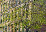 American elm (Ulmus americana), New York, New York, USA<br /> <br /> Canon EOS-1Ds Mark II, EF70-200mm lens +1.4x lens, f/22 for 1/10 second, ISO 400
