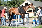 Kentucky Derby winner Super Saver gets a bath on a spectacular August morning.