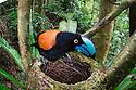 Madagascar: Birds