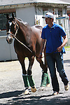 Grade I winner Lava Man accomapnies Derby/Preakness winner I'll Have Another arriving at Belmont Park ready for his pursuit of the Triple Crown.  Trainer Doug O'Neill
