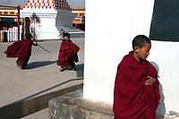 Young Tibetan monks in the thangka artists village, Upper Wutan Monastery, Rebgong (Chinese name - Tongren),  on the Qinghai-Tibetan Plateau. China.