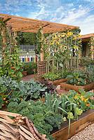 Food garden, raised beds, sunflowers, trellis, blue sky