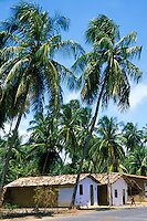 Roadside village houses with coconut trees, Porto de Pedras, Alagoas, Brazil
