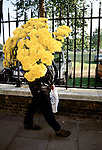 Chelsea, London. 1984<br /> At the ringing of the bell at 4pm on the last day of the annual Chelsea Flower Show, sedate English garden lovers scramble to buy the RHS prize entries, in this case yellow chrysanthemums at knock down prices.