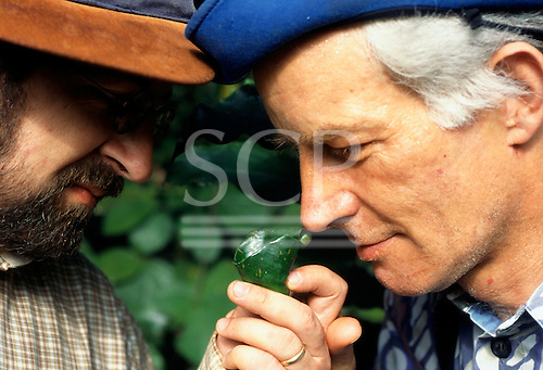 Makande, Gabon. Perfumiers Roman Kaiser and Olivier Perault smelling samples in the rainforest.
