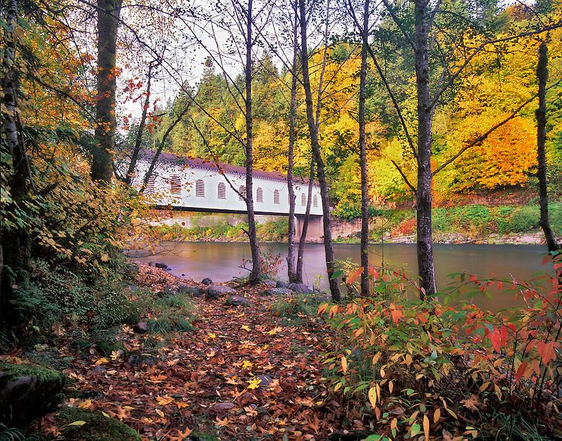 Goodpasture Bridge and McKenzie River with fall color. Oregon.