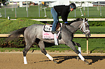 April 23, 2014  In Tune gallops at Churchill Downs.  She is owned by Wertheimer and Frere and trained by Todd Pletcher.  She is the winner of the Gulfstream Oaks.