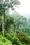 Lowland rainforest shrouded in mist, Danum Valley Conservation Area, Sabah, Borneo, Malaysia