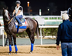 DUBAI, UAE - MARCH 24: Bob Baffert approaches Arrogate on the track at Meydan Race Track in preparation for the Dubai World Cup Race on March 24, 2017 in Dubai, UAE. (Photo by Douglas DeFelice/Eclipse Sportswire/Getty Images)