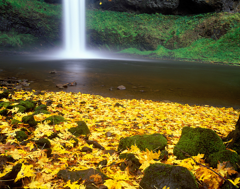 M00184M.tif   South Falls with fall colored Big Leaf Maple leaves. Silver Falls State Park, Oregon