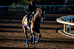 November 4, 2020: Authentic, trained by trainer Bob Baffert, exercises in preparation for the Breeders' Cup Classic at Keeneland Racetrack in Lexington, Kentucky on November 4, 2020. Jon Durr/Eclipse Sportswire/Breeders Cup
