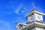 Moon & Seagulls, Newport Beach, CA.