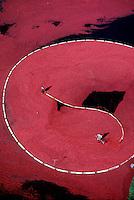 Cranberry harvest, aerial view, Carver, MA.