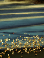 Seagulls on beach . Samuel H. Boardman State Park, Oregon