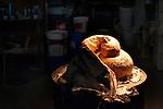 Componente di cartapesta in lavorazione.<br /> Il carnevale di Gallipoli è tra i più noti della Puglia. La sua tradizione è antichissima ed è documentata, oltre che in atti e documenti settecenteschi, anche da radici folcloristiche che affondano le origini in epoca medioevale, tramandate fino ad oggi dallo spirito popolare. La prima edizione (per come la conosciamo) risale al 1941; nel 2014 sarà l'edizione numero 73.<br /> La manifestazione carnascialesca è organizzata dall' Associazione Fabbrica del Carnevale, nata nel febbraio 2013 con la finalità diorganizzare, promuovere e riportare in auge il Carnevale della Cittàdi Gallipoli. L'Associazione raccoglie al suo interno i maestri cartapestai Gallipolini e tanti giovani artisti, che vogliono valorizzare il Carnevale della città bella. Presidente dell'Associazione è Stefano Coppola.<br /> La manifestazione ha inizio il 17 gennaio, giorno di sant'Antonio Abate (te lu focu = del fuoco), con la Grande Festa del Fuoco, quando si accende con la tradizionale focara, un grande falò di rami d'ulivo. L'ultima domenica di carnevale e il martedì grasso lungo corso Roma, nel centro cittadino, si svolge la sfilata dei carri allegorici in cartapesta e dei gruppi mascherati corso Roma davanti a migliaia di spettatori provenienti da tutta la provincia di Lecce e da città pugliesi. Il tema dell'edizione di quest'anno è un omaggio a Walter Elias Disney.<br /> <br /> Component processing in paper mache.<br /> The Carnival of Gallipoli is among the best known of Puglia. Its tradition is very old and is documented , as well as records and documents in the eighteenth century , as well as folkloric roots that sink their roots in medieval times , handed down today by the popular spirit . The first edition dates back to 1941 and in 2014 will be the edition number 73 .<br /> The carnival is organized by the Association of Carnival Factory , founded in February 2013 with the objective to organize, promote and revive the Carnival of the city of