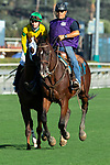 ARCADIA, CA. SEPTEMEBER 29:  #6 Vasilika, ridden by Flavien Prat, in the post parade of the Rodeo Drive Stakes (Grade l) on September 29, 2018, at Santa Anita Park in Arcadia, CA. (Photo by Casey Phillips/Eclipse Sportswire/CSM)